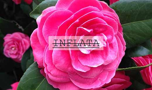 INFLATA
